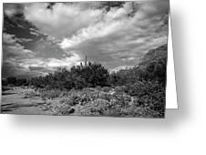 Sonoran Afternoon H10 Greeting Card