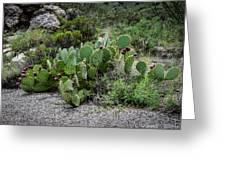 Sonoran Cactus Greeting Card