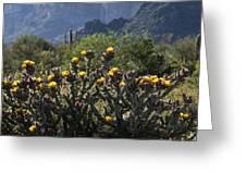 Sonoran Desert Cholla  Greeting Card