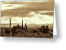 Sonoran Desert Mountains And Cactus Near Phoenix Greeting Card