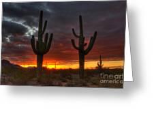 Sonoran Desert Sunrise 1 Greeting Card