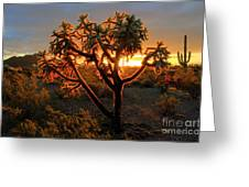 Sonoran Desert Sunrise 2 Greeting Card