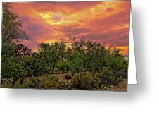 Sonoran Desert Sunset H44 Greeting Card