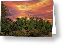 Sonoran Desert Sunset Op46 Greeting Card