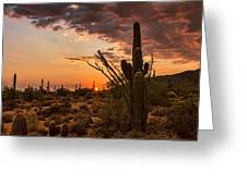 Sonoran Summer  Greeting Card