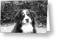Sophie - In Infrared Black And White Greeting Card