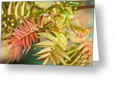 Sorbaria Sorbifolia Spring Foliage Greeting Card