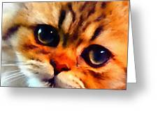 Soulfull Eyes Kitten Portrait Greeting Card