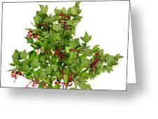 Sour Red Berries Bush Isolated Greeting Card