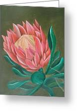 South Africa Protea Greeting Card
