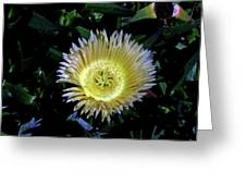 South African Flower 1 Greeting Card