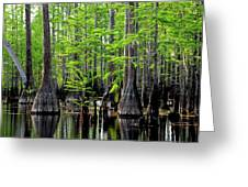 South Carolina Low Country Greeting Card