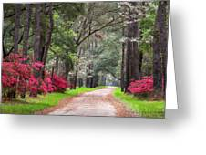 South Carolina Lowcountry Spring Flowers Dirt Road Edisto Island Sc Greeting Card