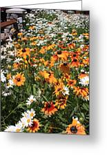 South Lake Tahoe Flowers Greeting Card