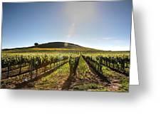 South Napa Valley Morning Greeting Card