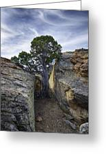 South Of Pryors 2 Greeting Card by Roger Snyder