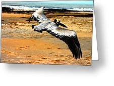 South Padre Pelican Greeting Card