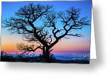 South Rim Tree Greeting Card