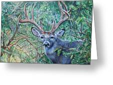 South Texas Deer In Thick Brush Greeting Card