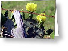 South Texas Fence Greeting Card