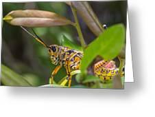 Southeastern Lubber Grasshopper Greeting Card