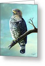 Southern Banded Snake Eagle Greeting Card