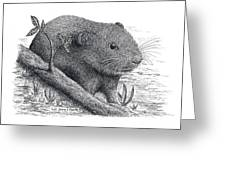 Southern Bog Lemming Greeting Card
