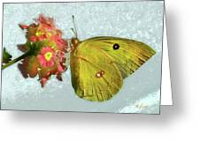 Southern Dogface Butterfly Feasting On December Lantanas Austin V2 Greeting Card