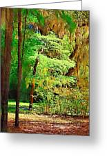 Southern Forest Greeting Card