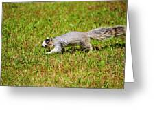 Southern Fox Squirrel Greeting Card