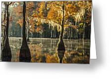 Southern Gold Greeting Card