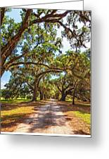 Southern Lane - Evergreen Plantation Greeting Card