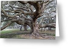 Southern Live Oak Greeting Card