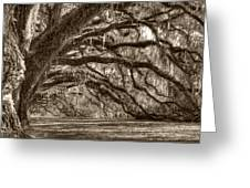 Southern Live Oak Trees Greeting Card