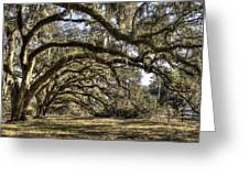 Southern Live Oaks With Spanish Moss Color Greeting Card