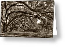 Southern Live Oaks With Spanish Moss Greeting Card