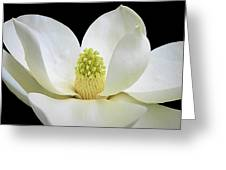 Southern Magnolia 2 Greeting Card