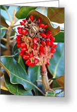 Southern Magnolia Seedpods Greeting Card
