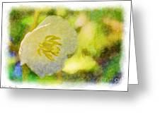 Southern Missouri Wildflowers - Mayapples Bloom - Digital Paint 2 Greeting Card