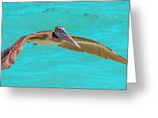 Southern Most Pelican Greeting Card