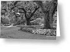 Southern Oaks In Black And White Greeting Card
