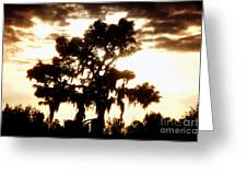 Southern Pine Greeting Card