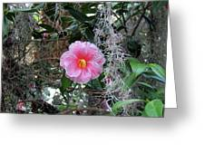 Southern Pink Camellia Greeting Card