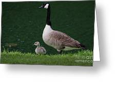 Southern Pond View Greeting Card