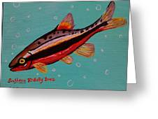 Southern Redbelly Dace Greeting Card