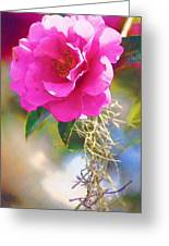 Southern Rose Greeting Card