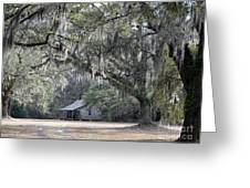 Southern Shade Greeting Card
