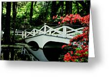 Southern Splendor Greeting Card