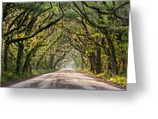 Southern Tree-lined Dirt Road Of Dreams Greeting Card