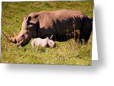 Southern White Rhino With A Little One Greeting Card